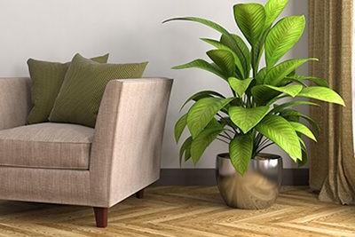 צמחי בית ומשרד