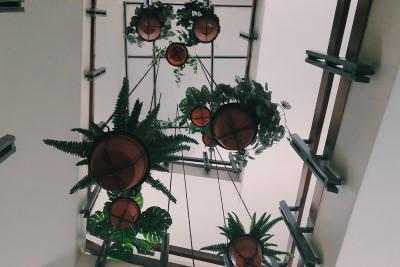 צמחי תלייה לבית